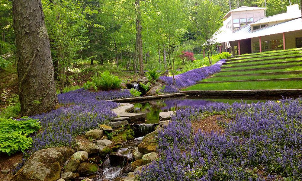 Purple Groundcover   Andrew Zema's Landscaping & Excavating - Berkshire County, Columbia County, Rensselaer County