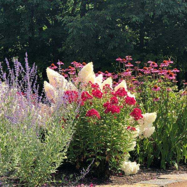 Colorful Flowers | Andrew Zema's Landscaping & Excavating - Berkshire County, Columbia County, Rensselaer County
